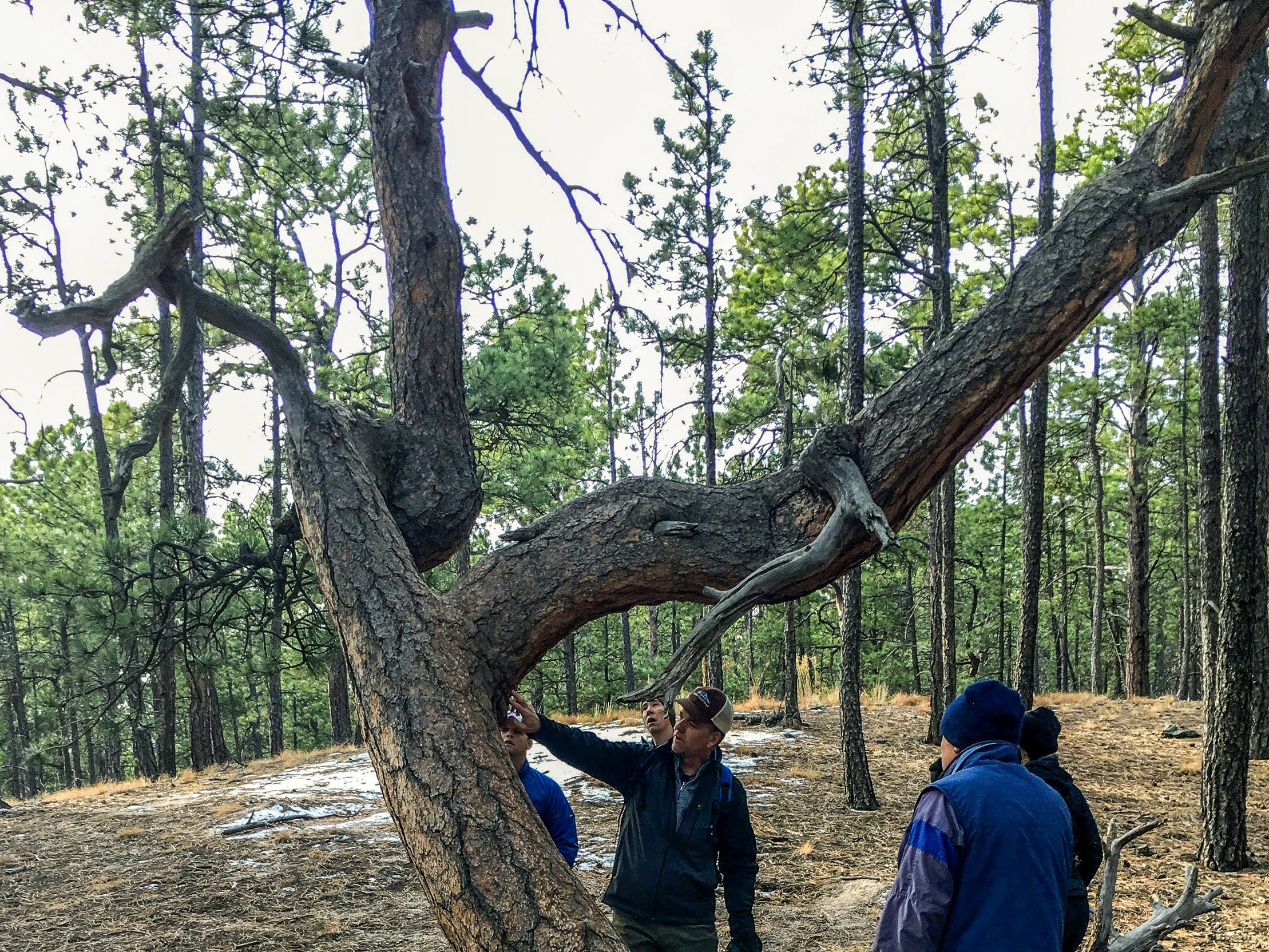 Twisted Trees Trail - Difficulty: EasyTime: 2 HoursDistance: 1 - 3 Miles