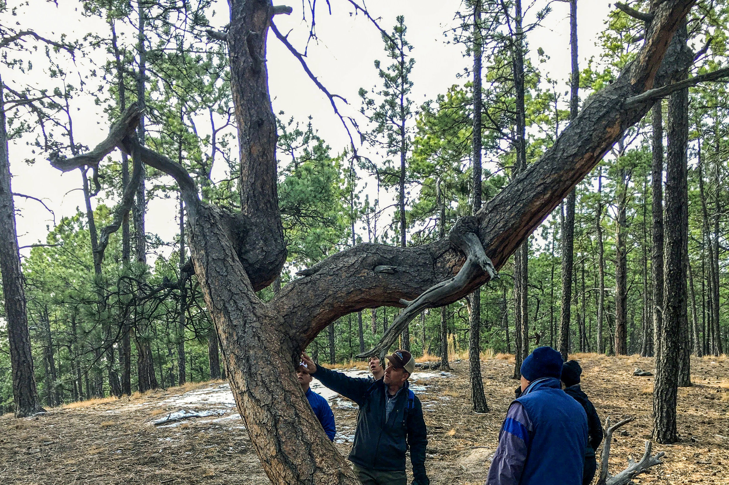 Twisted Trees - This easy loop trail winds through the Fallen Timbers Wilderness Area in Fox Run Regional Park.