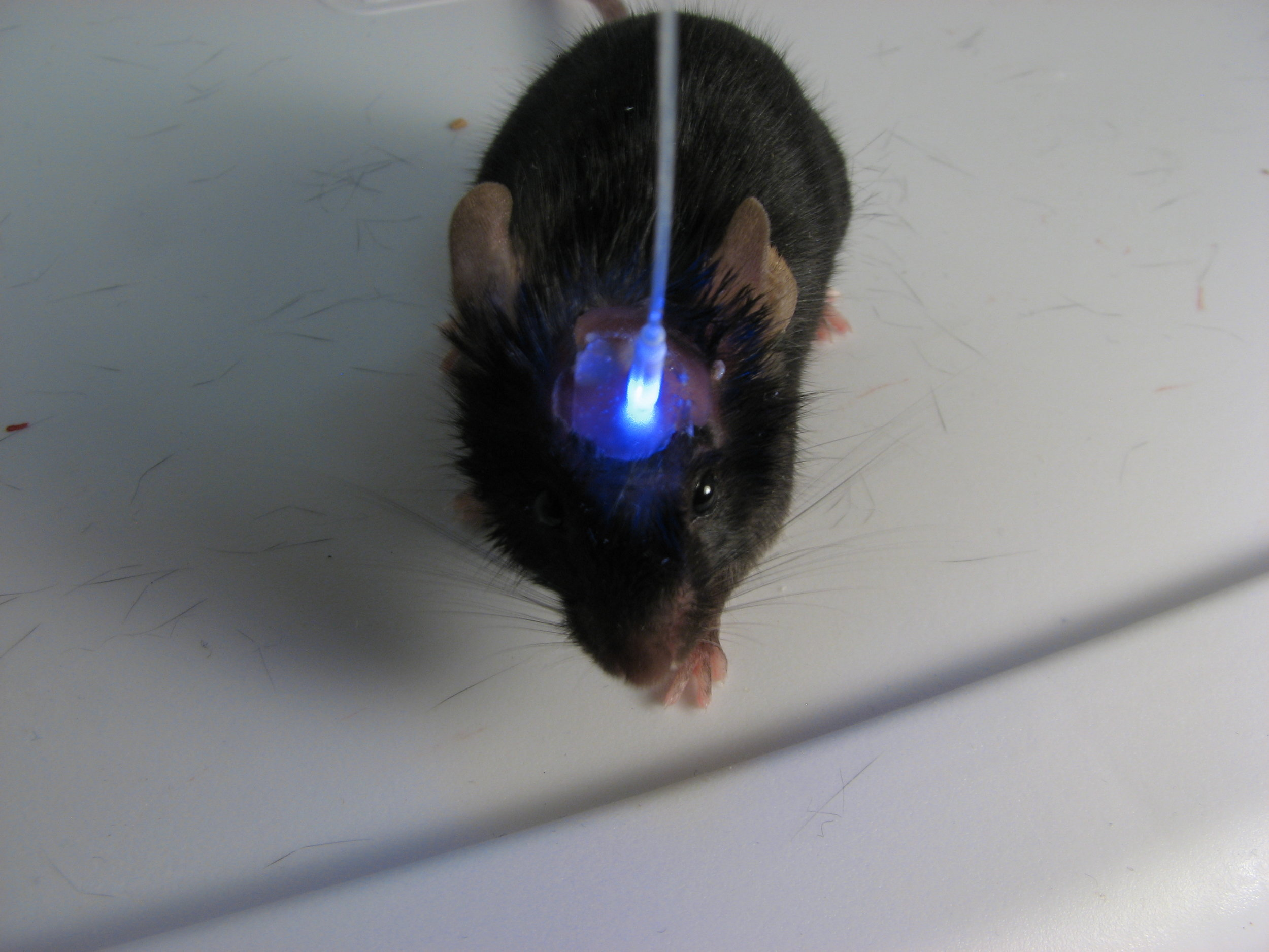 Optogenetics.JPG
