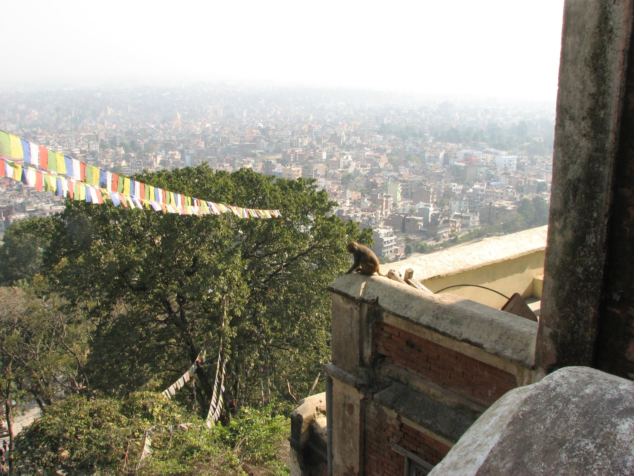 Monkey's eye view of Kathmandhu