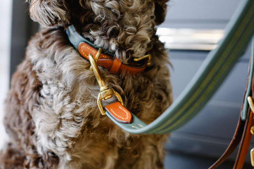 luxury dog accessories leads collars pouch hounds of harrogate