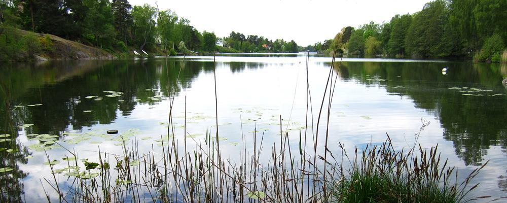 Långsjön.jpg