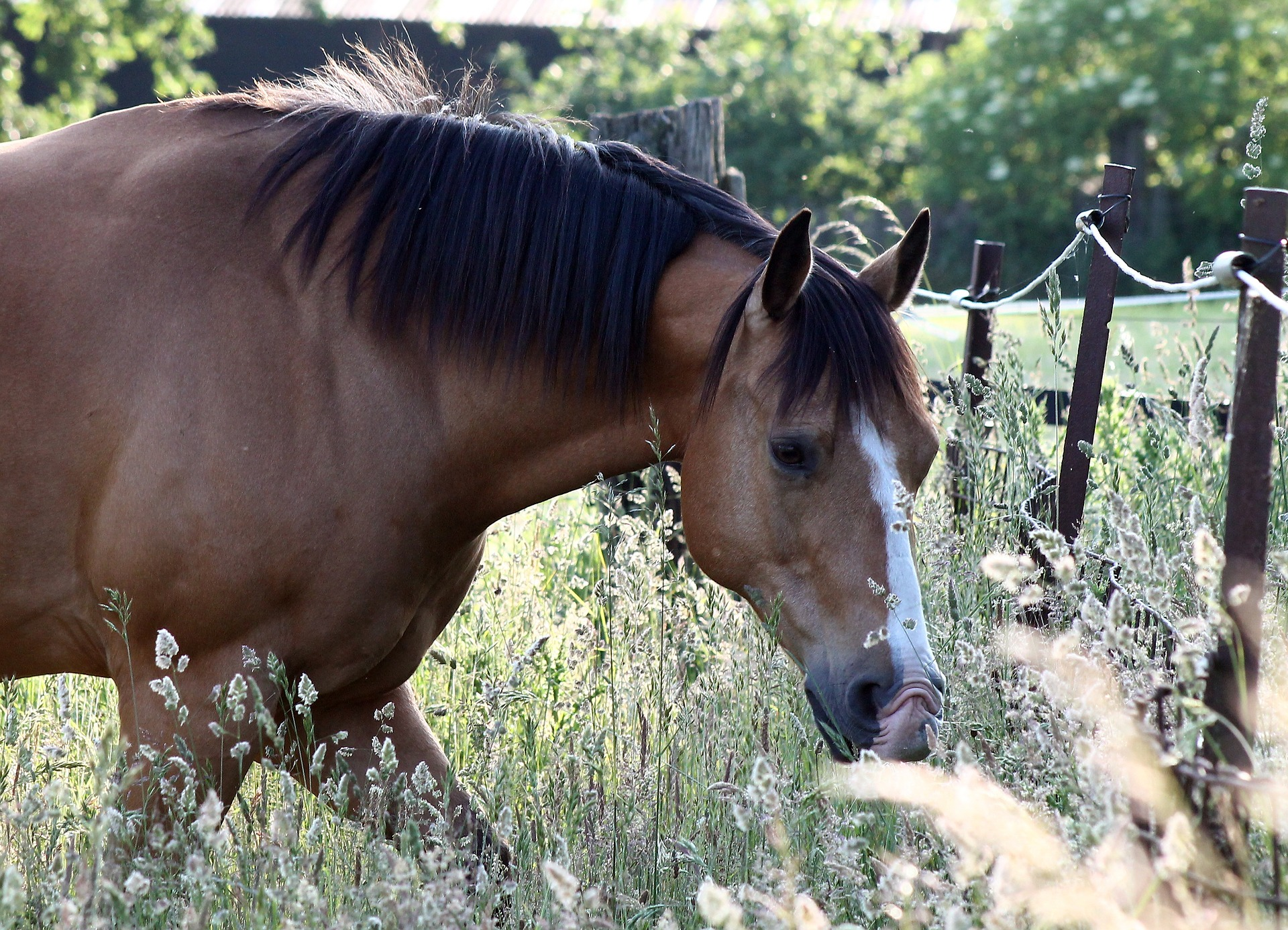 horse-2759673_1920.jpg