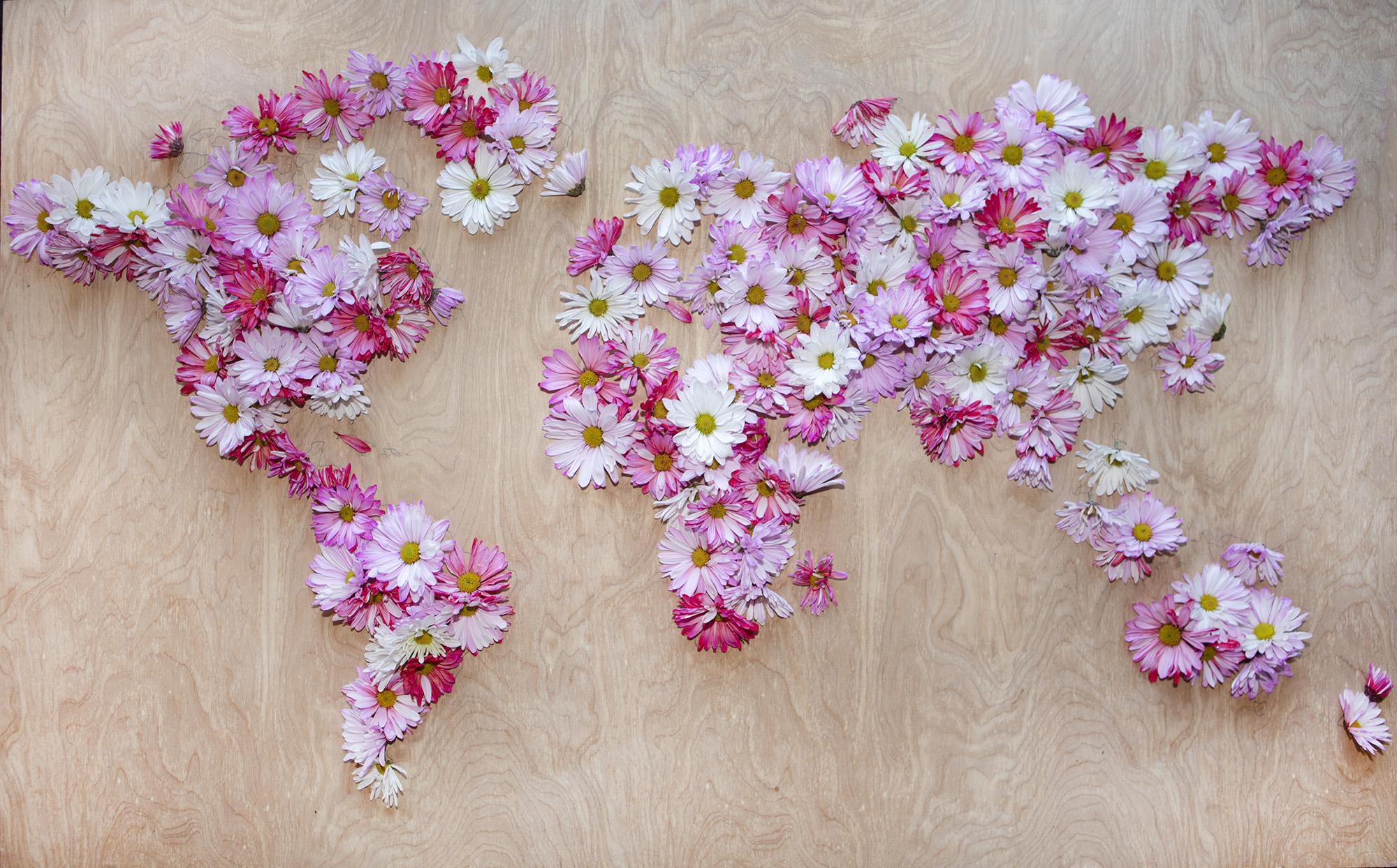 w_w_pink_daisy_map_flash2000.jpg