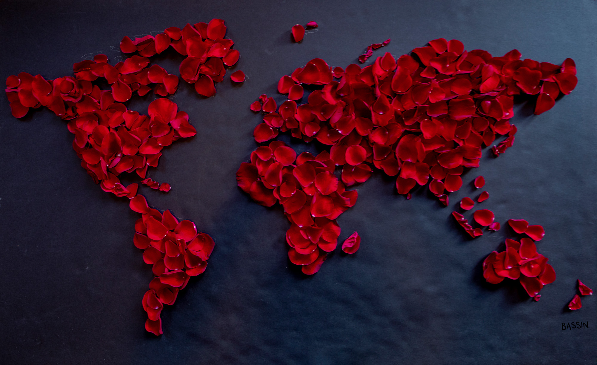 W+W_red_rose_petals_on_black_2000.jpg