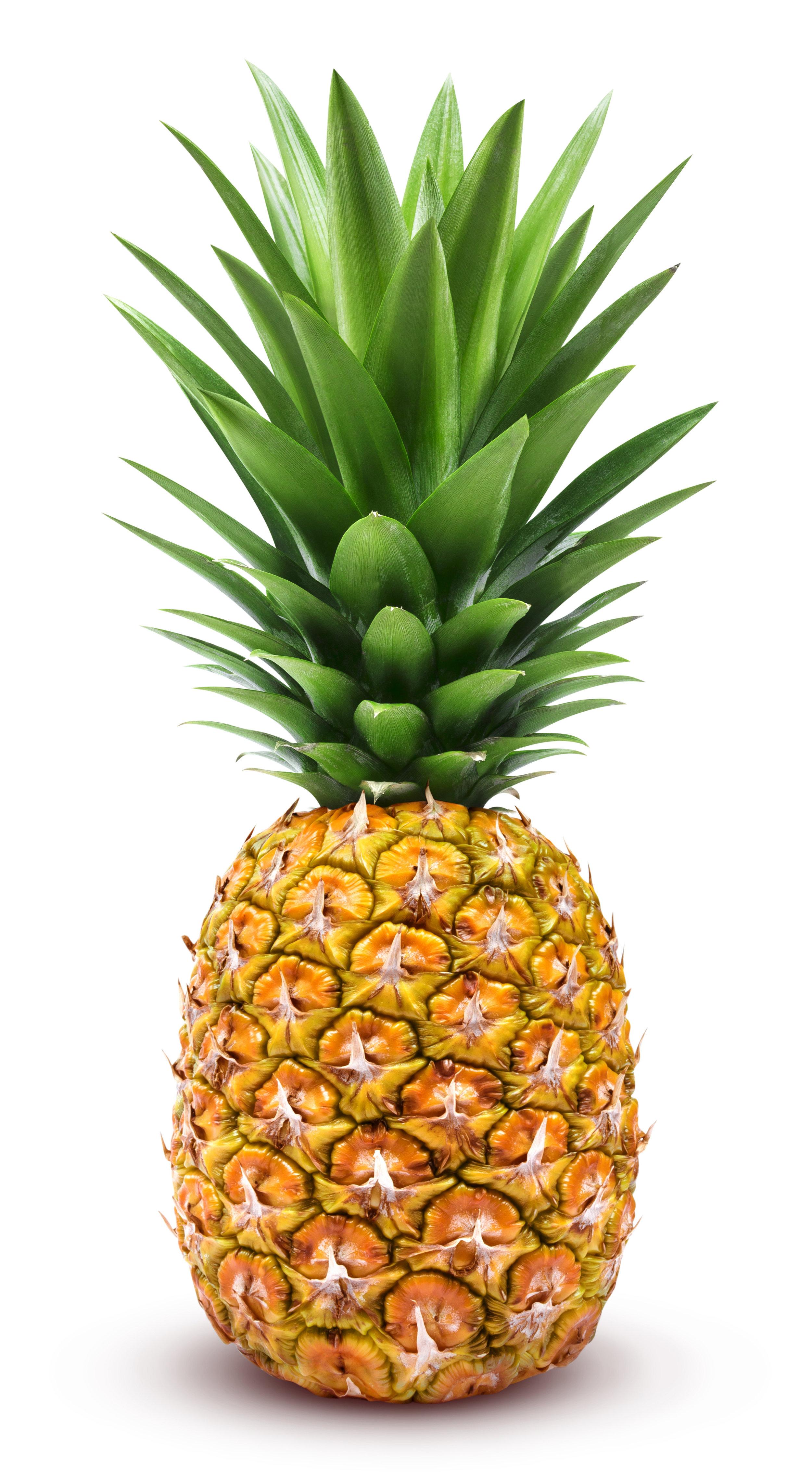 Emerging Pineapple Stock Photo.jpeg