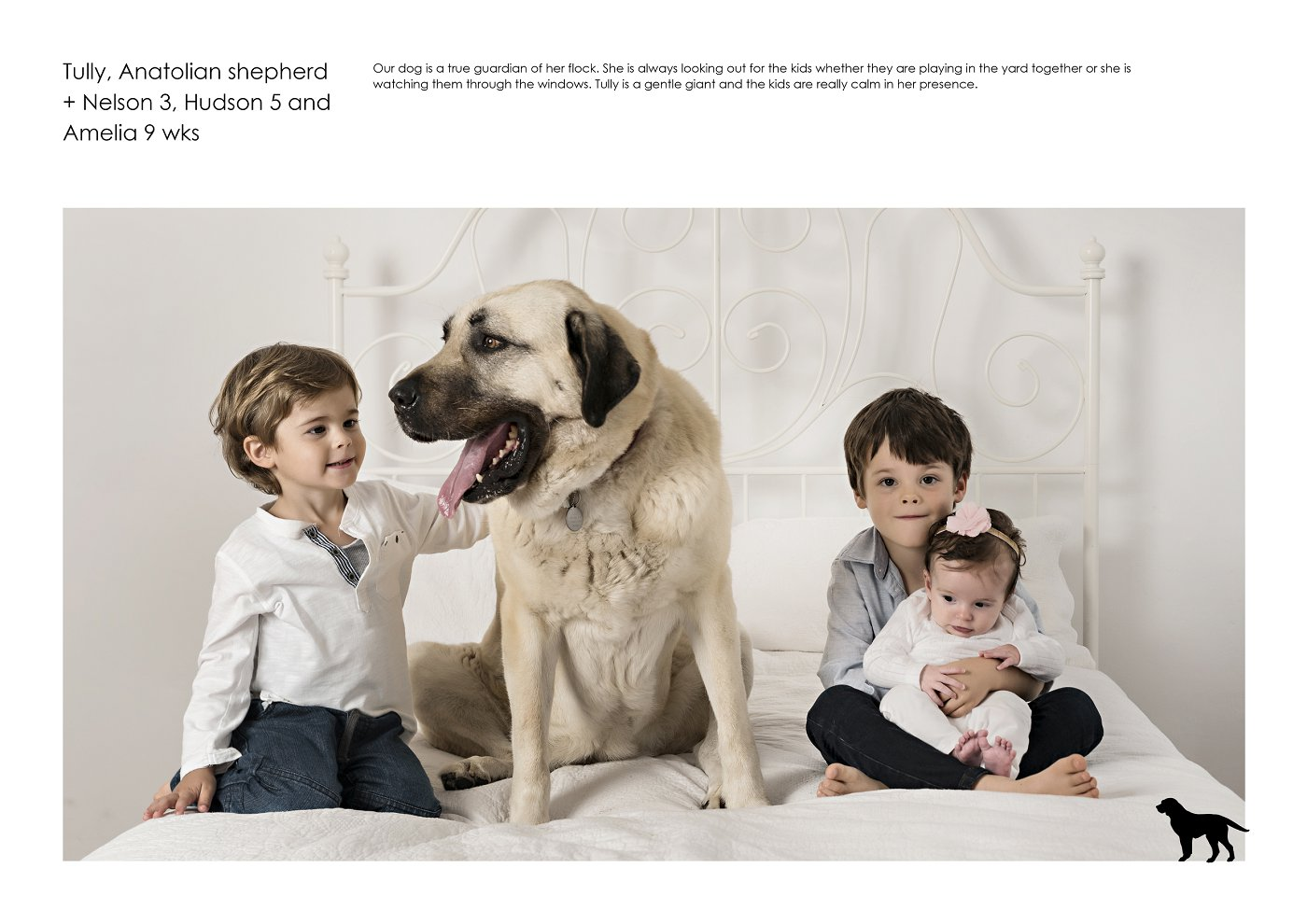 sydney-pet-kids-photographer (36).jpg