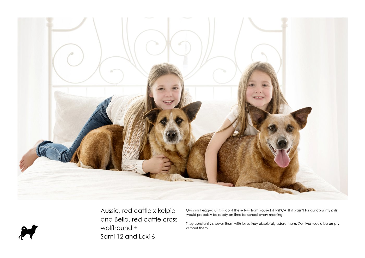 pet-photographer-sydney (5).jpg