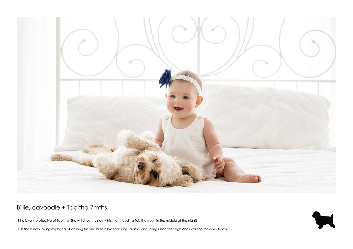 pet-photographer-sydney (8).jpg
