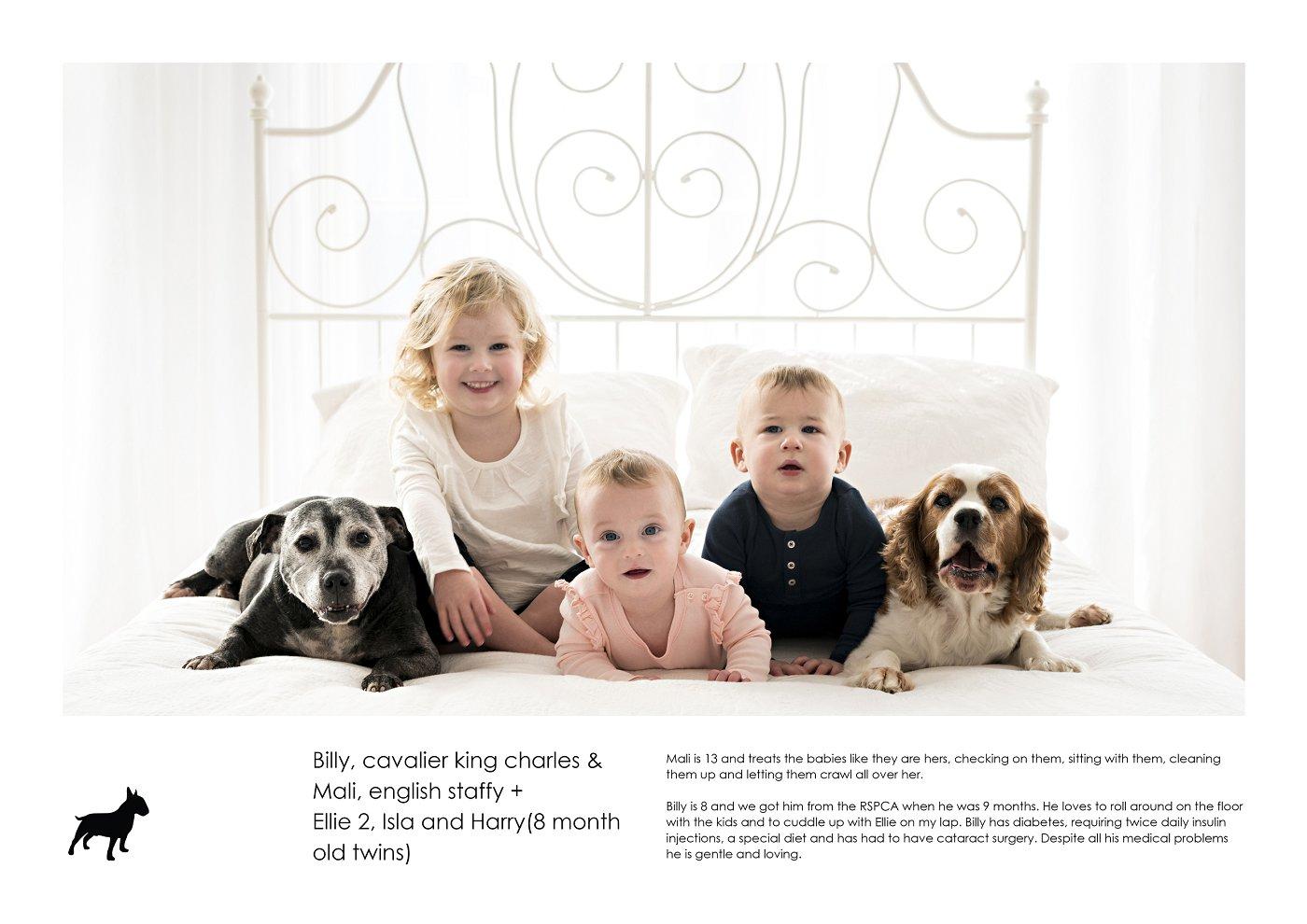 pet-photographer-sydney (9).jpg