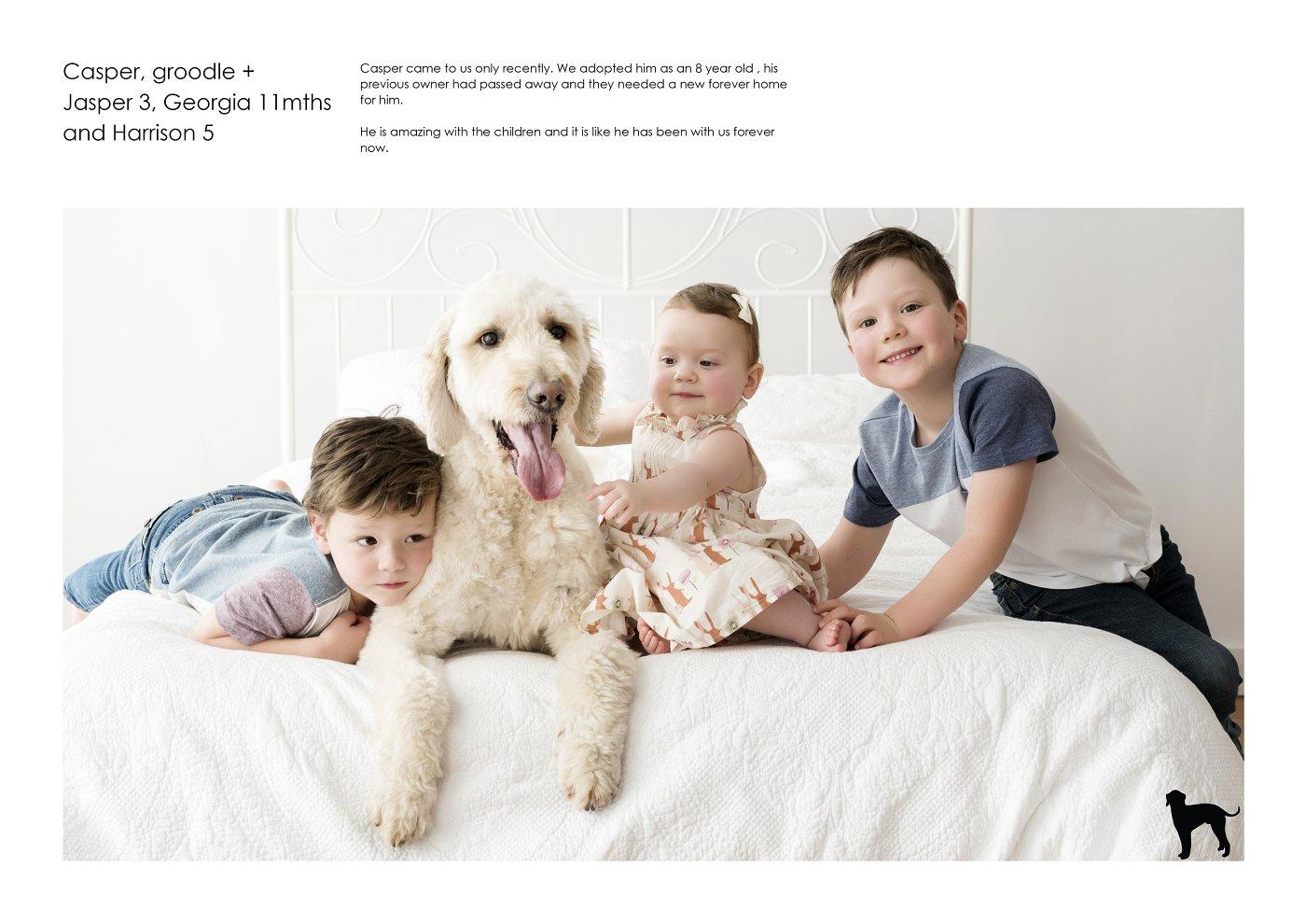 pet-photographer-sydney (15).jpg
