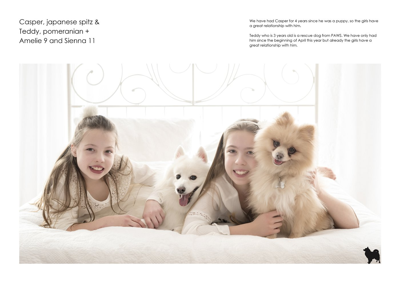 pet-photographer-sydney (16).jpg