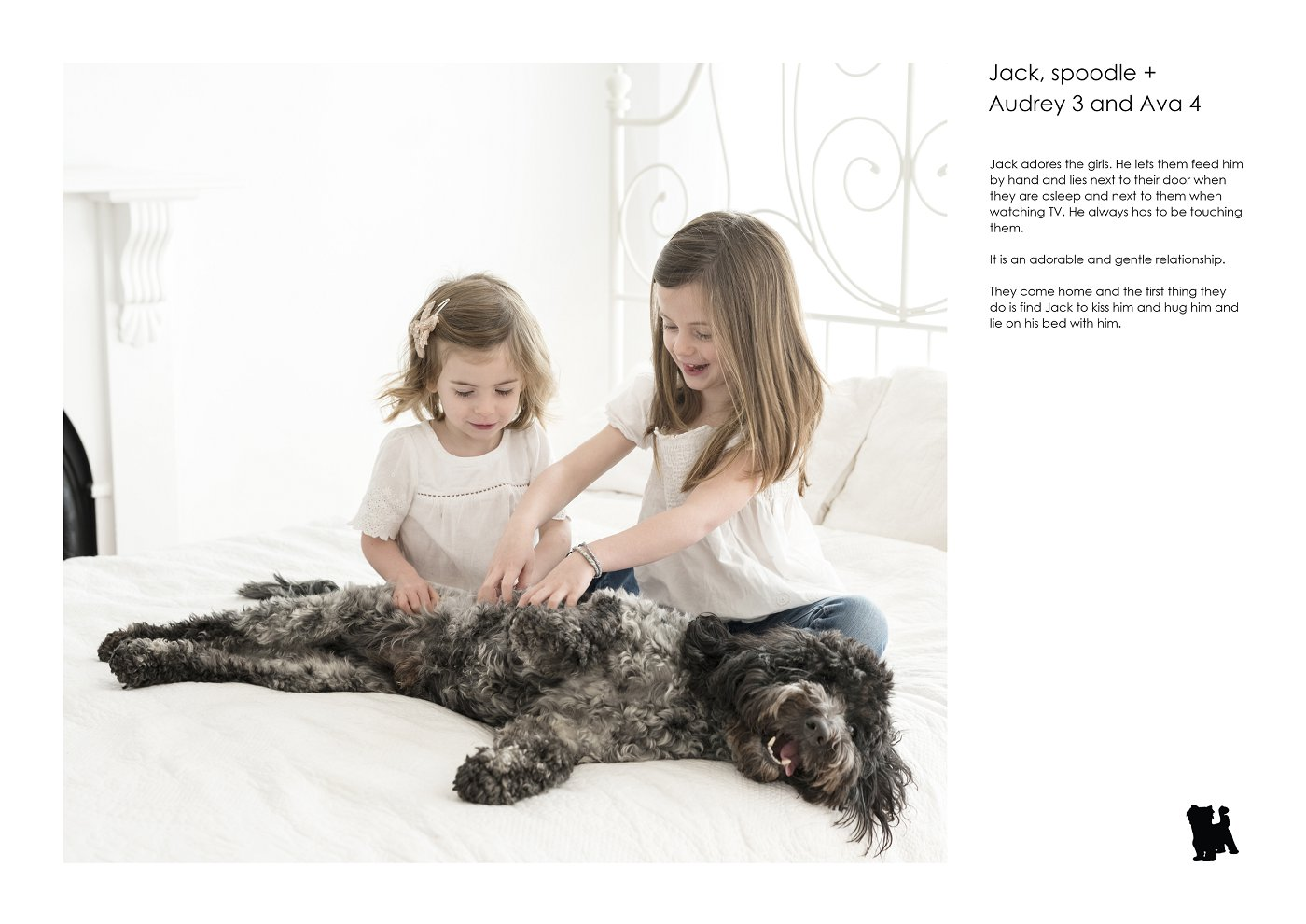 pet-photographer-sydney (38).jpg