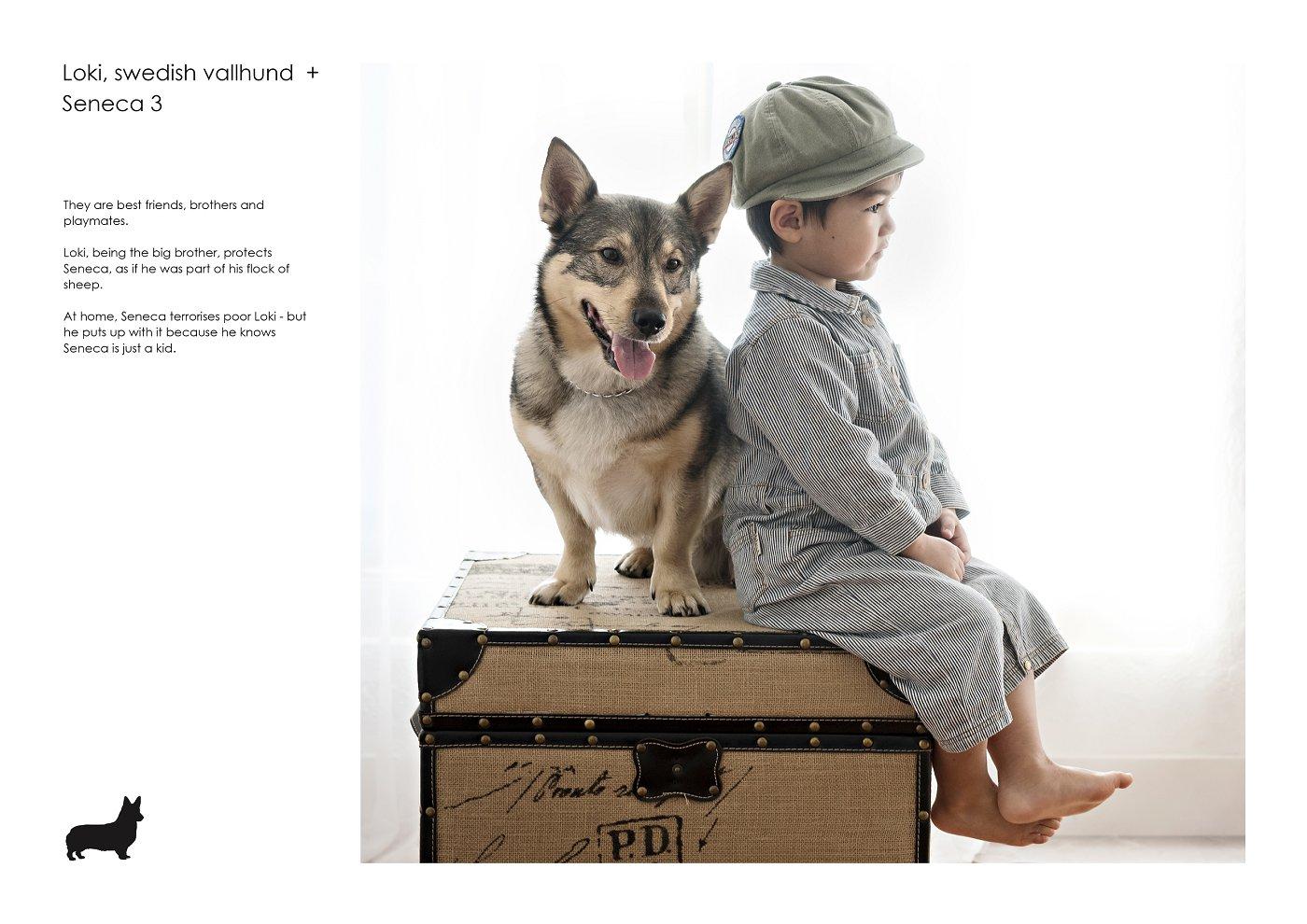pet-photographer-sydney (44).jpg