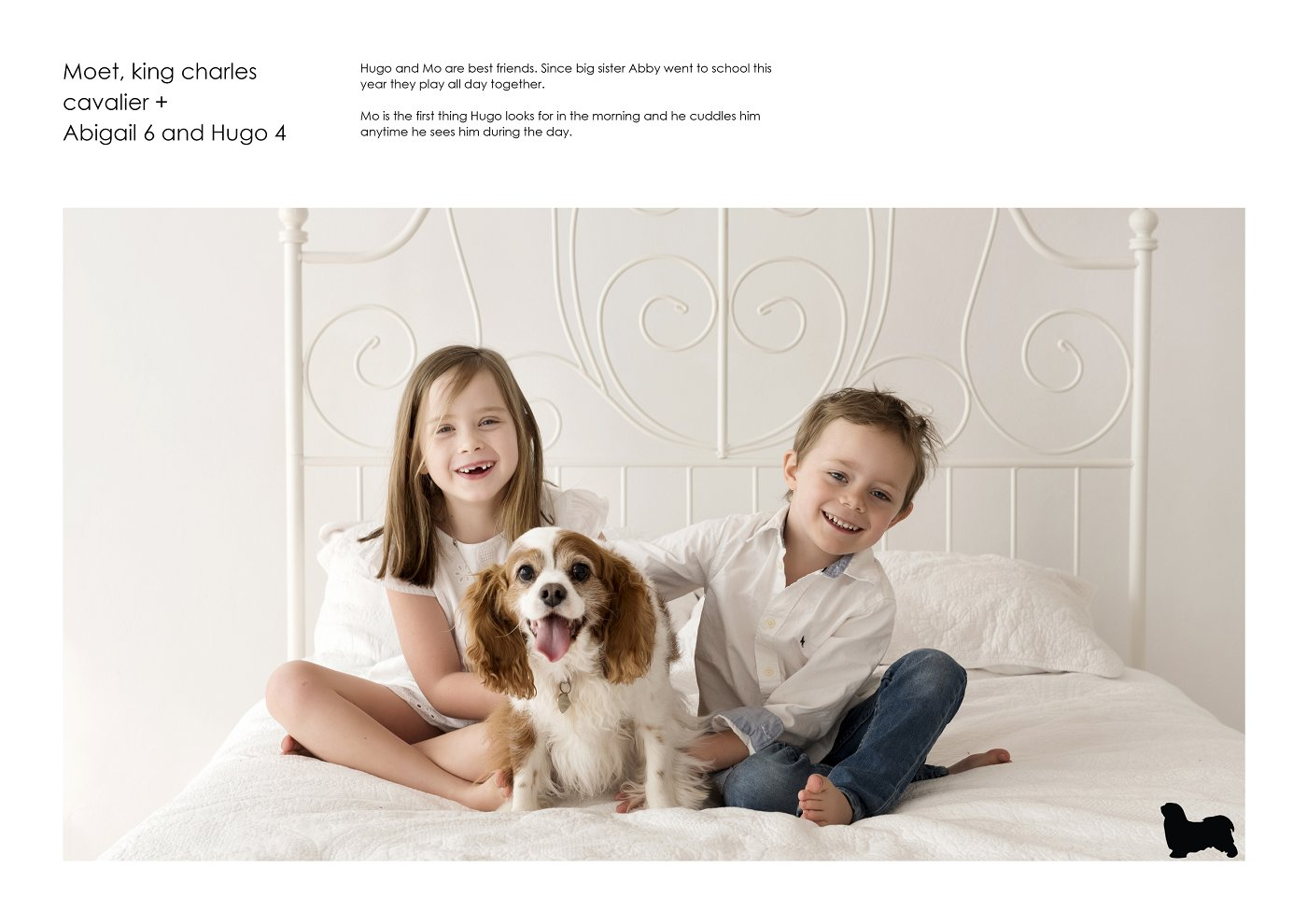 pet-photographer-sydney (58).jpg