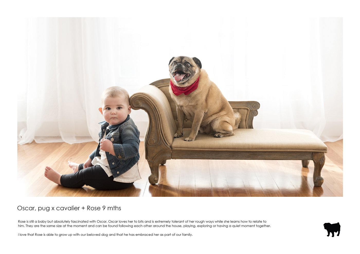pet-photographer-sydney (68).jpg