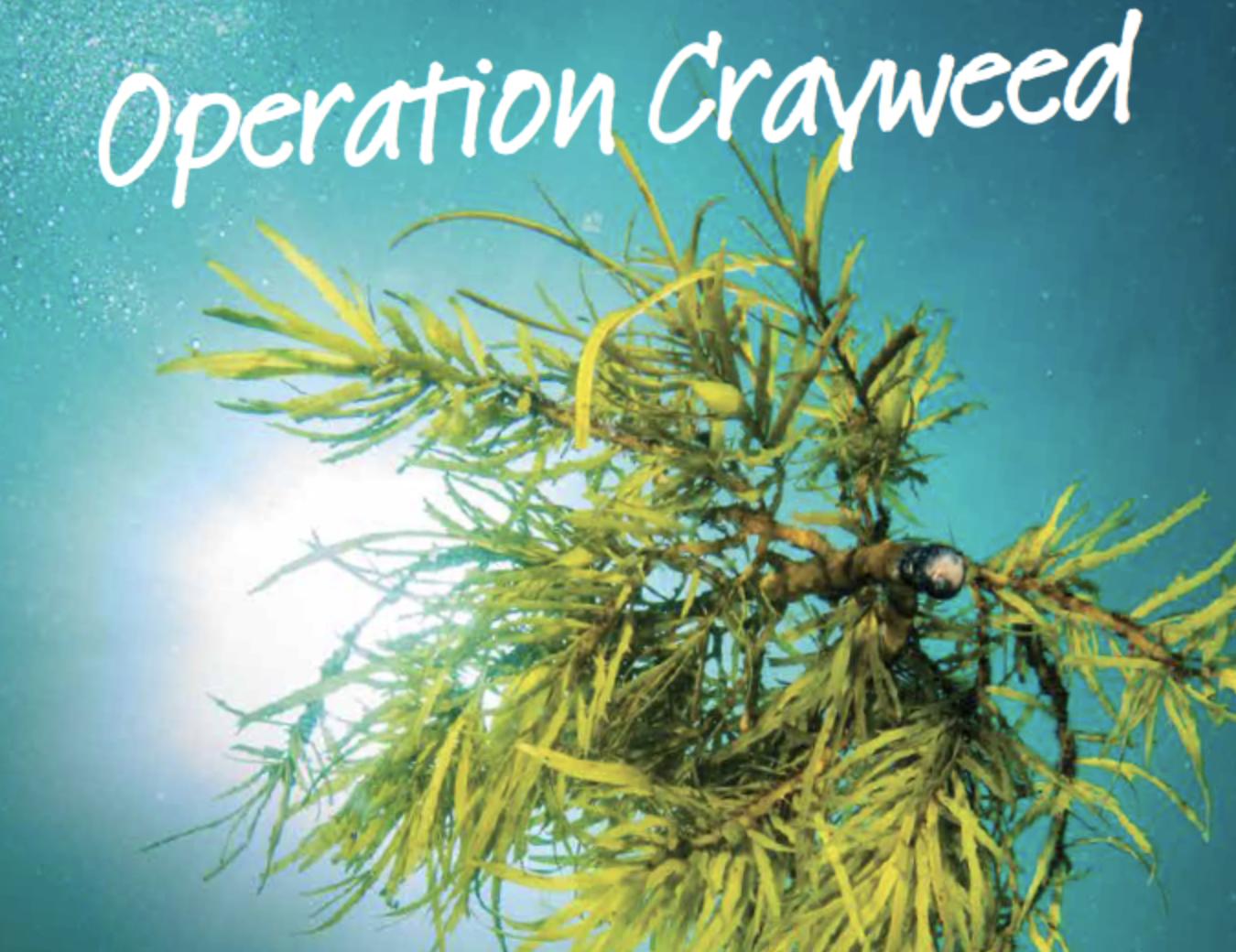 Image: Operation Crayweed