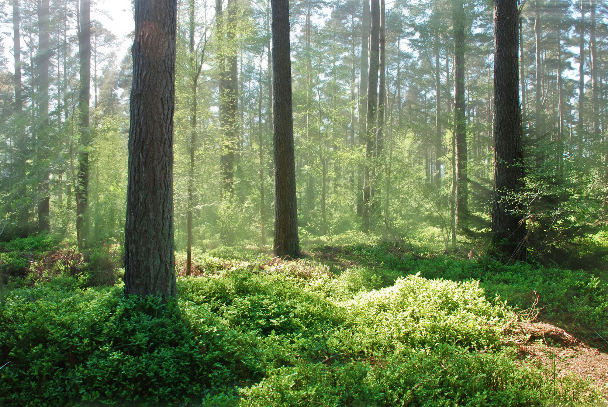 Nature-forrest-threetrees-.jpg