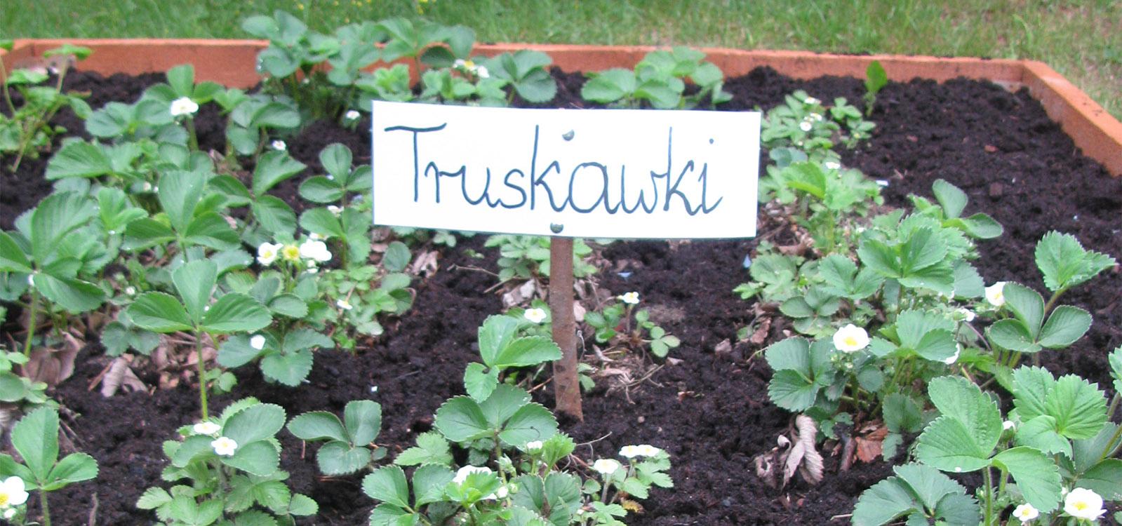 EKOLUDEK_Niepubliczne_przedszkole_ekologiczne_Lodz_Truskawki.jpg