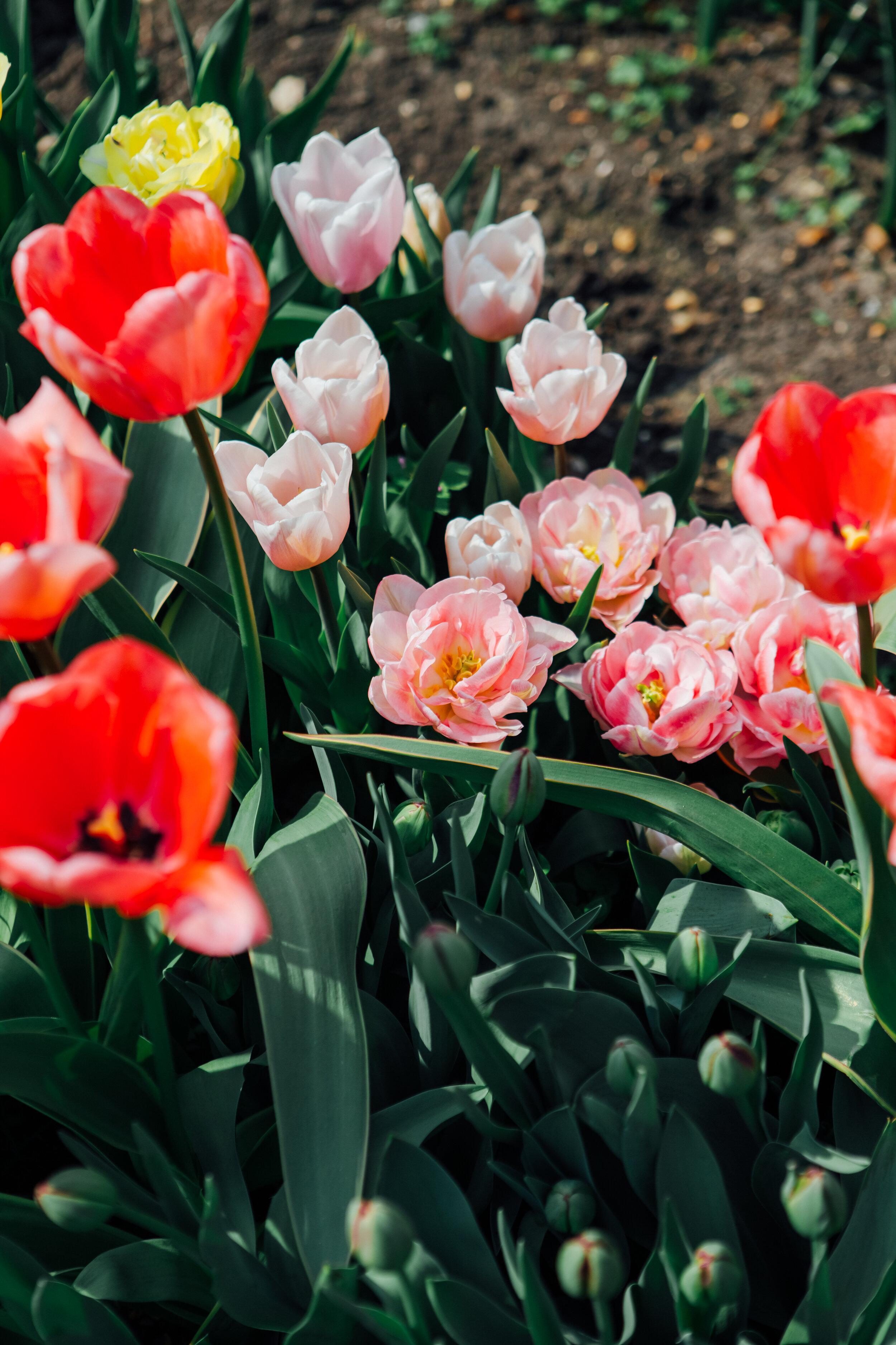 Flower Society Helena Dolby-1525.jpg