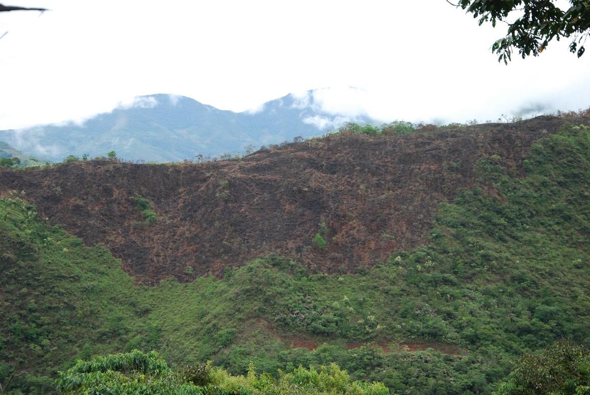 Parcelle-deforestee.jpg