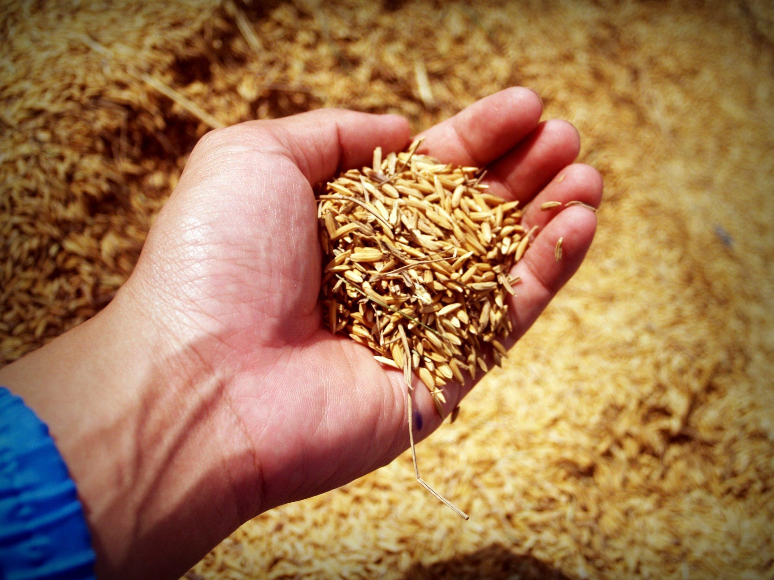 Ertragspotenzial steigern - Mit Solorrow können Sie das Ertragspotenzial Ihrer Felder optimieren und damit Ihren Gewinn steigern.Indem Sie durch teilflächenspezifische Bearbeitung jede Zone Ihres Schlags optimal mit Düngemittel versorgen, können Sie Ihren Ernteertrag steigern. Zonen mit hohem Wachstumspotenzial benötigen beispielsweise mehr Nährstoffe um Ihr volles Potenzial ausschöpfen zu können als Zonen mit niedrigerem Wachstumspotenzial.Mehr über die optimierten Dosierung und die Erstellung einer individuellen Applikationskarte finden Sie hier.