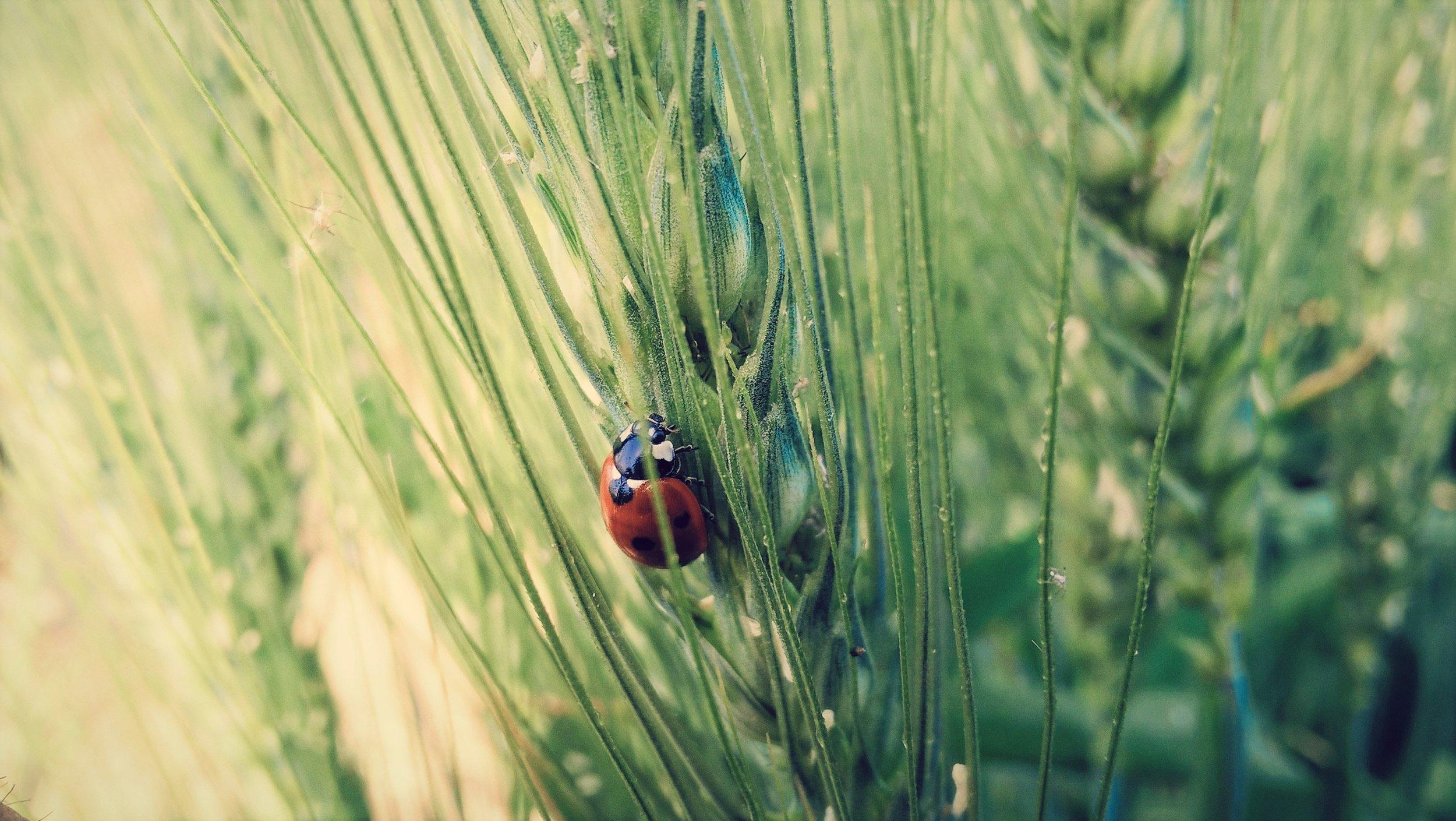 Organic farming Solorrow