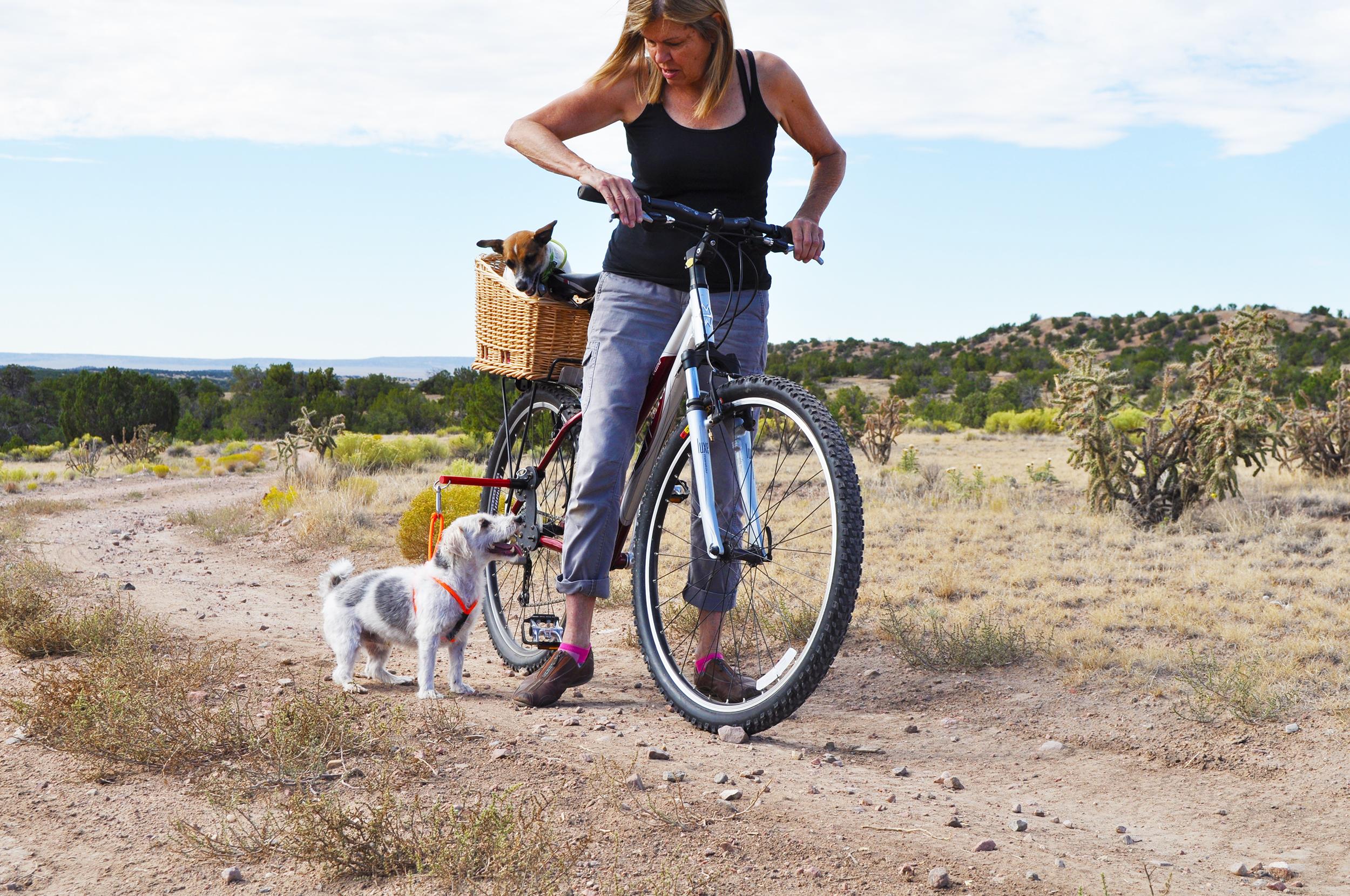 bikerdog.jpg