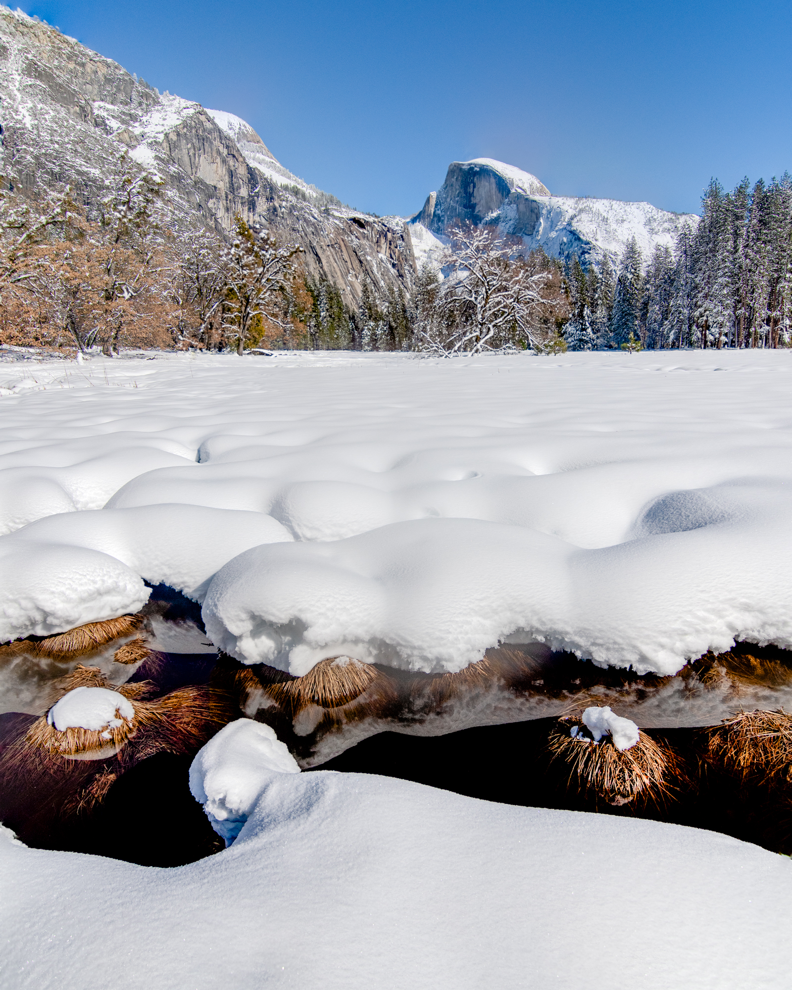 Field of Snow - Yosemite National Park