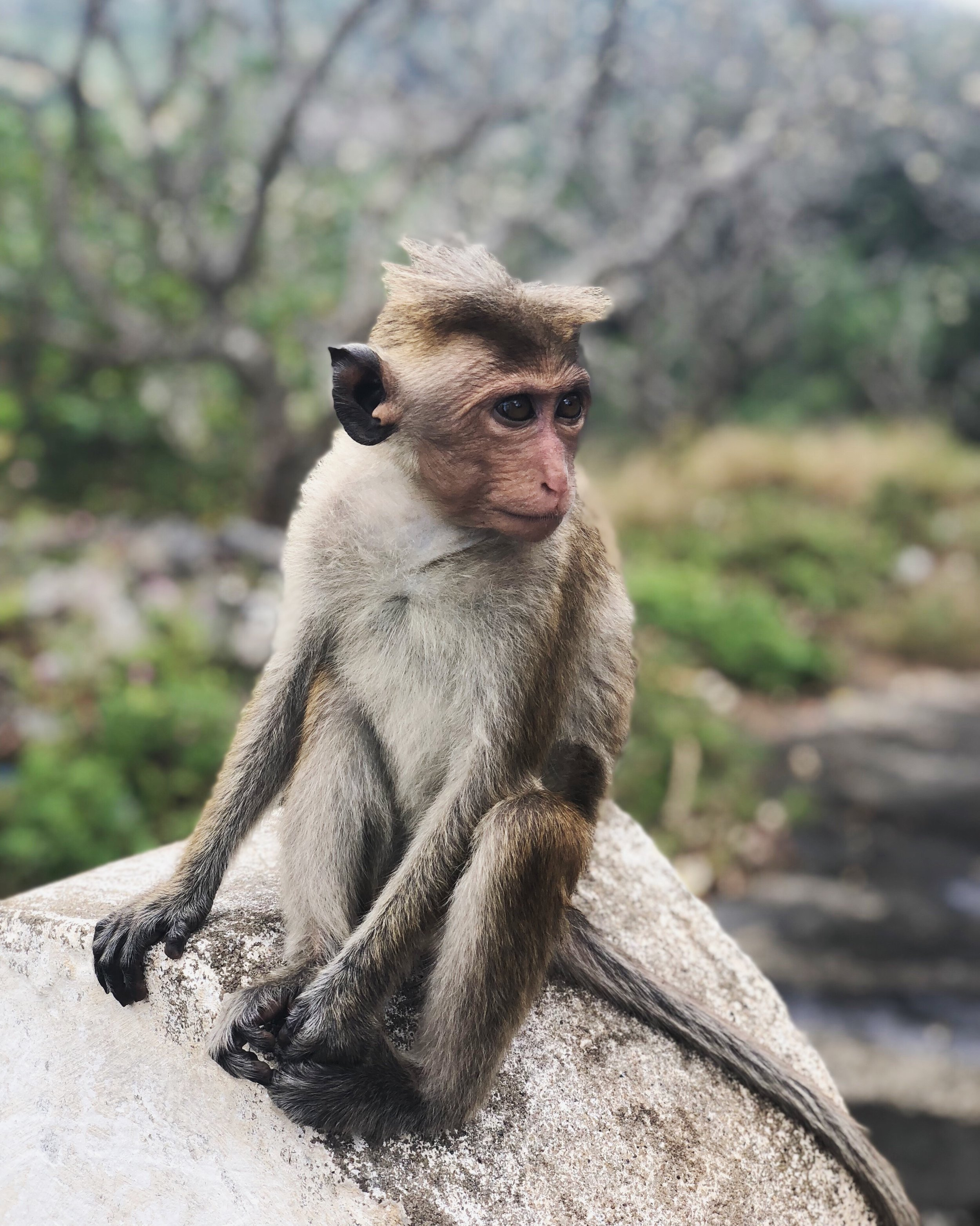 monkey-travel-sri lanka
