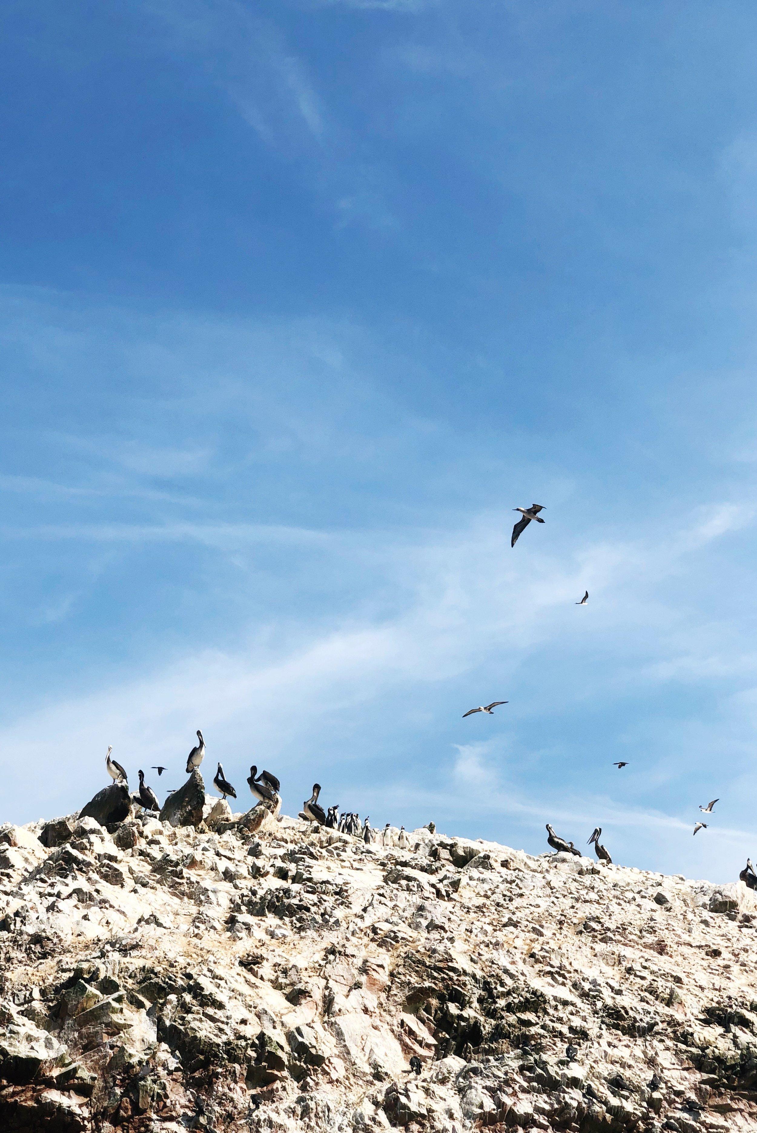 Ballestas Islands - paracas-peru - travel -tips - boat - south america -penguins- sea lions