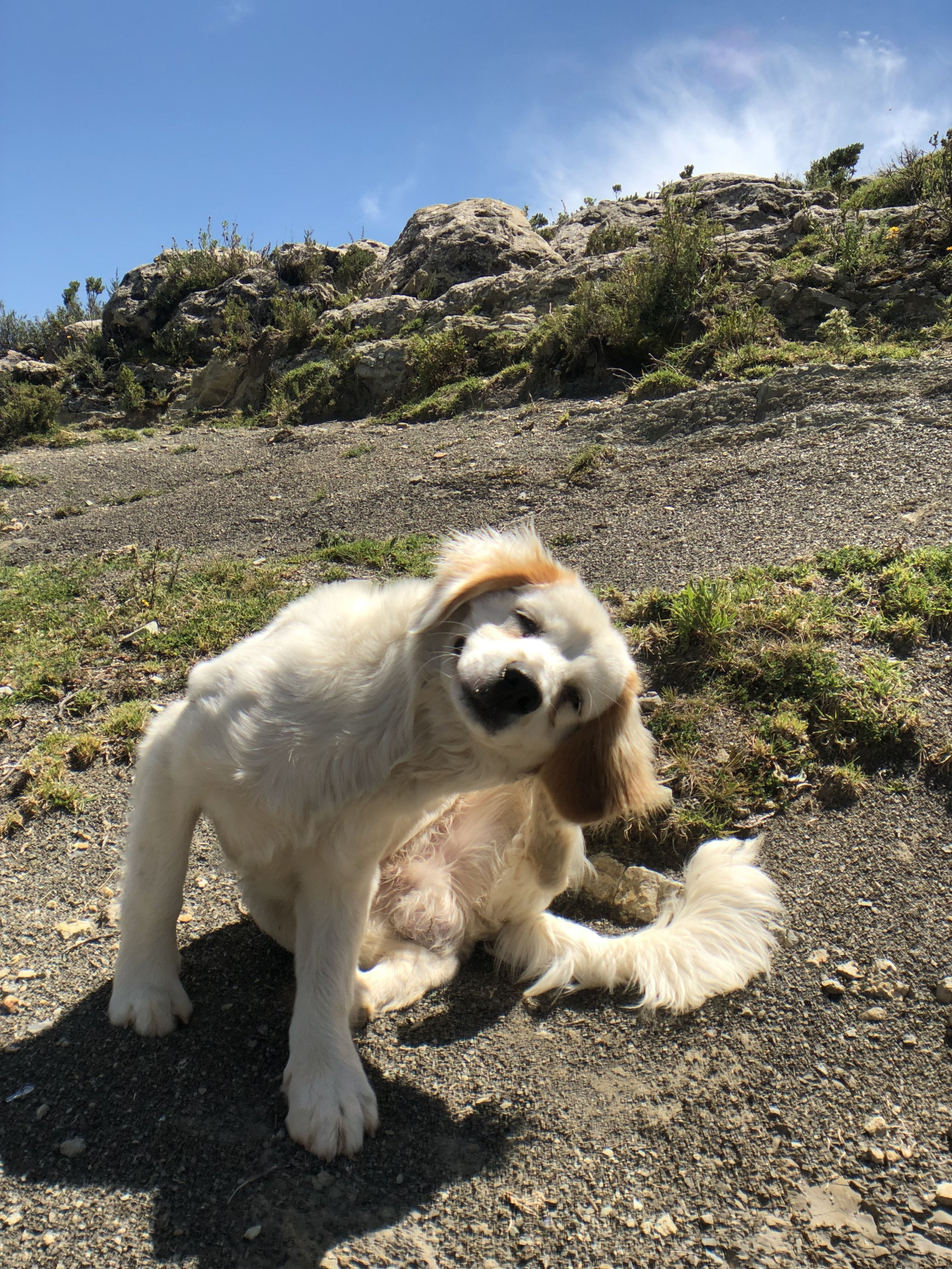 isla-del-sol-lake-titicaca-bolivia-travel-dog