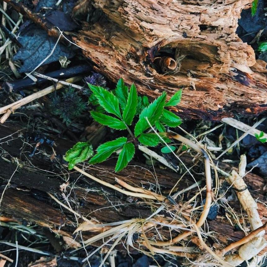 Plantskola med perenna växter -