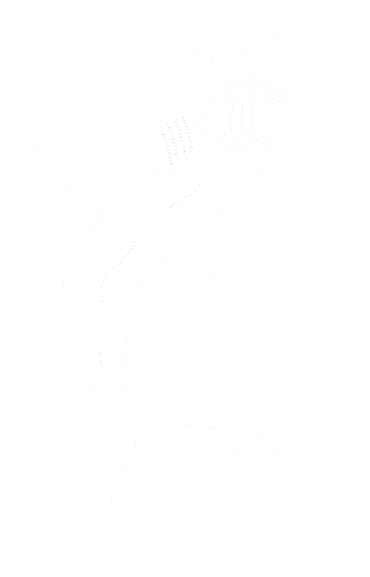 WHITE SHARK PNG.png