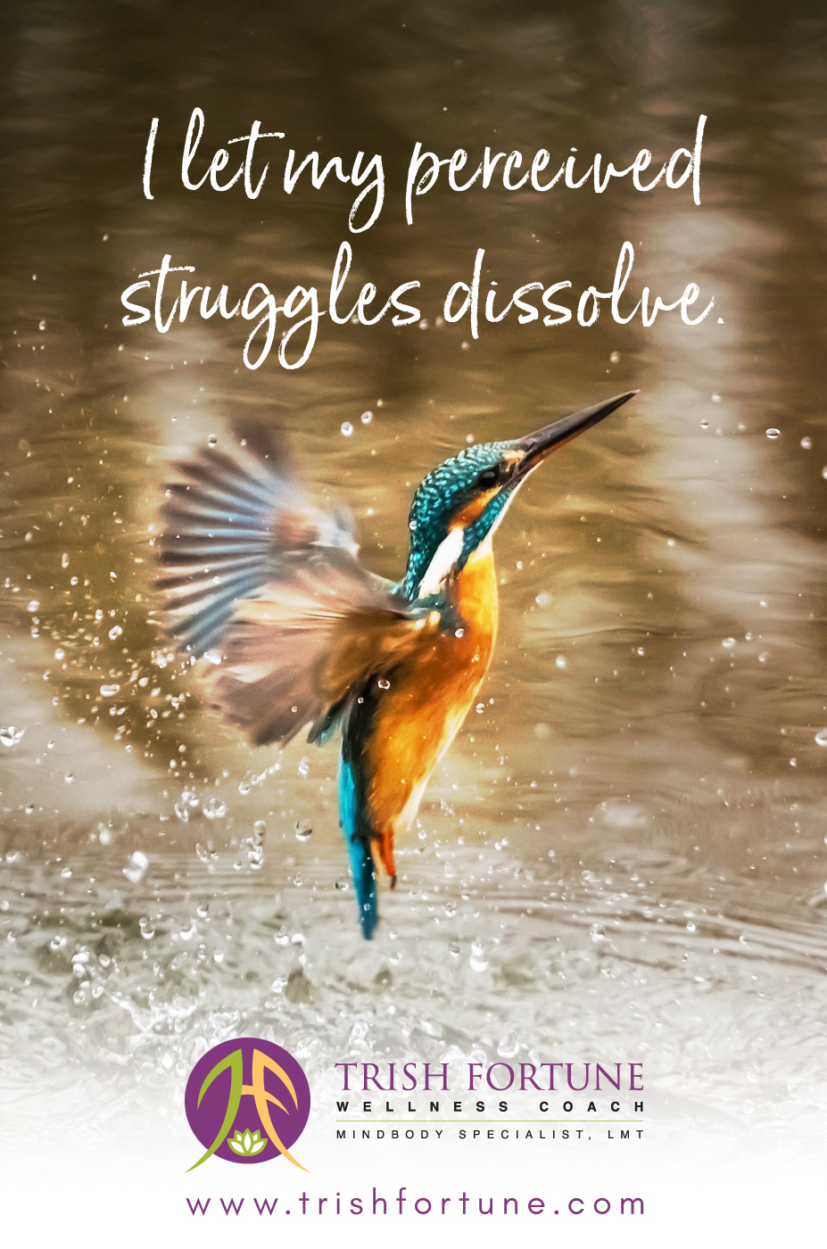 Hummingbird dissolved struggles.jpg
