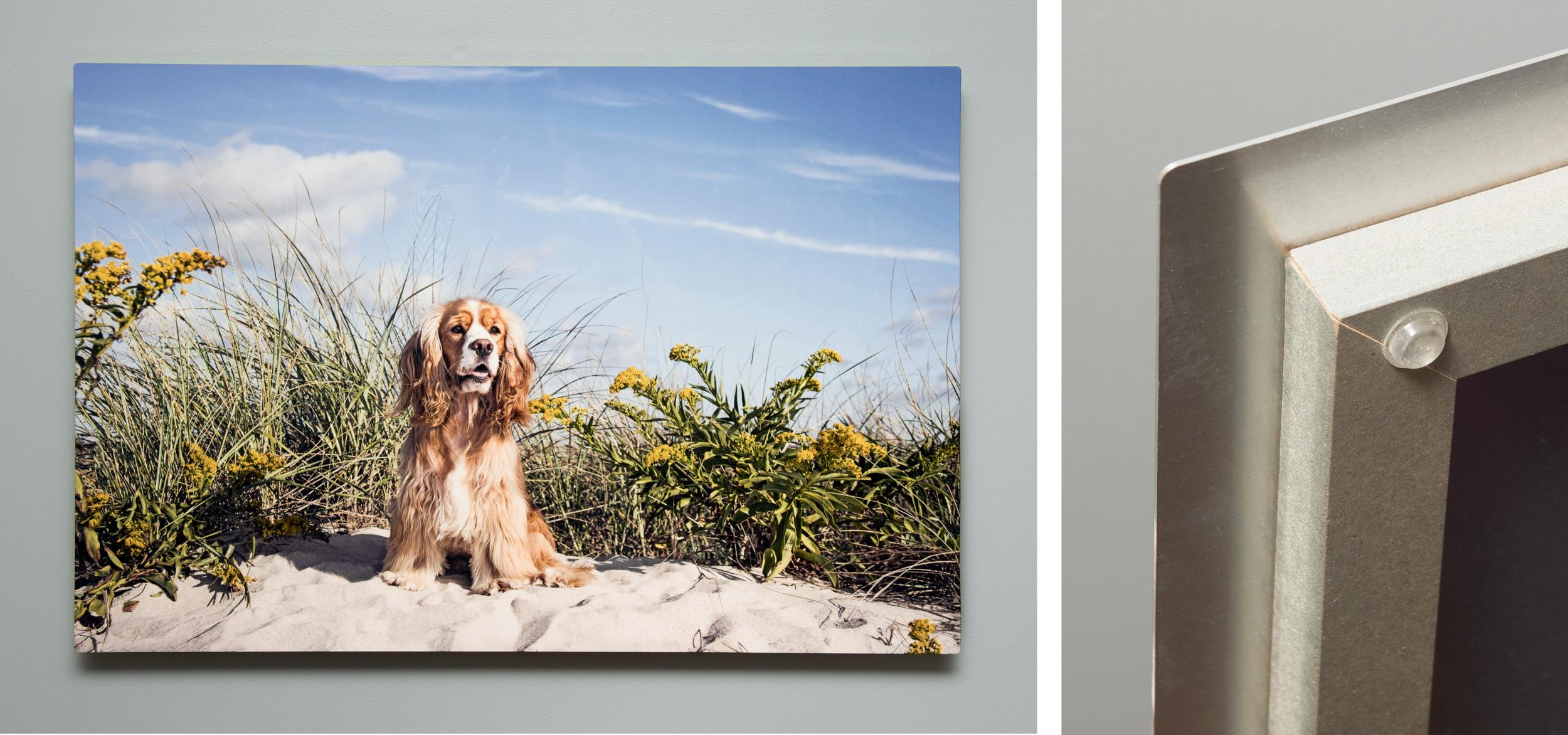 Dee is for Dogs_DSC_9761-Edit.JPG