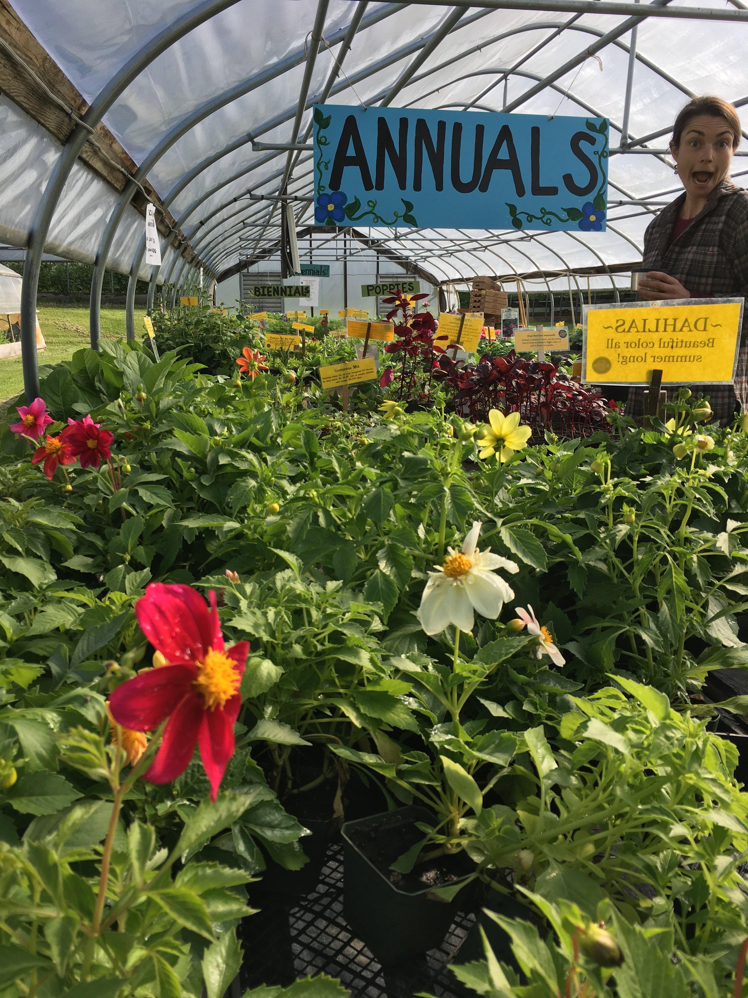 Kuenzi loves seedling sales!