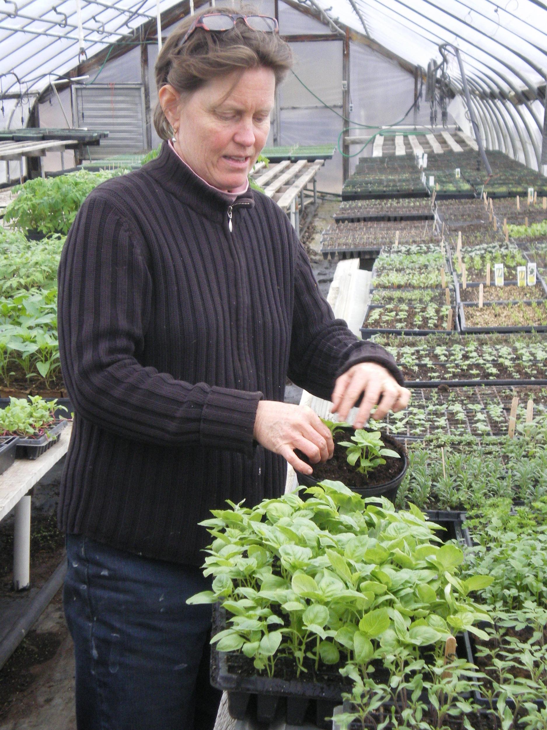 Sally Transplants Basil Seedlings.