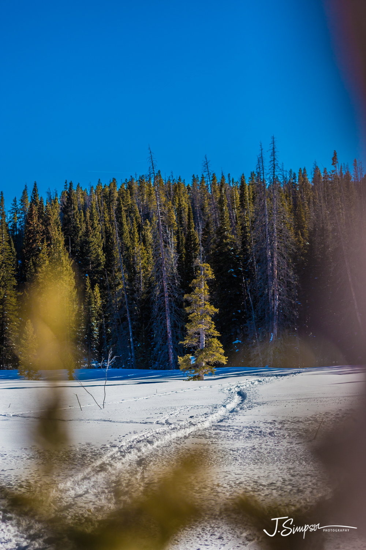 Colorado-Nature-Photographer-012.jpg