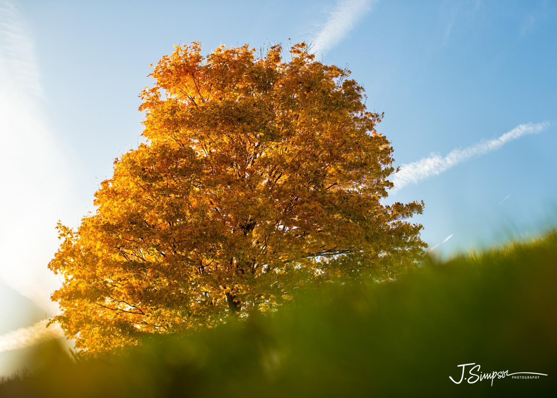 Iowa-Nature-Photographer.jpg