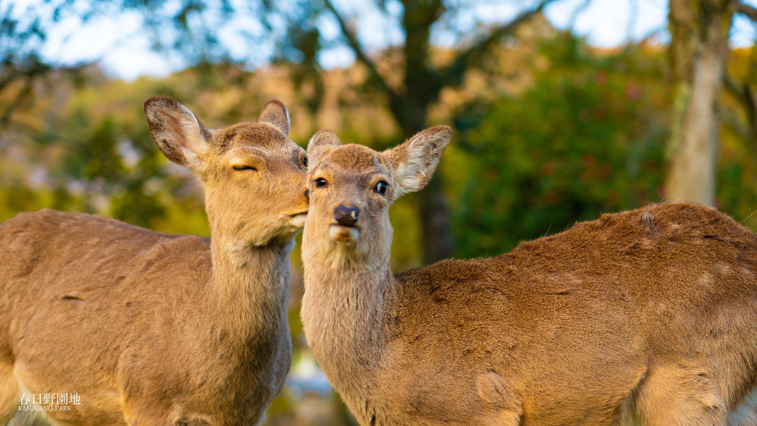 The Park of Deers