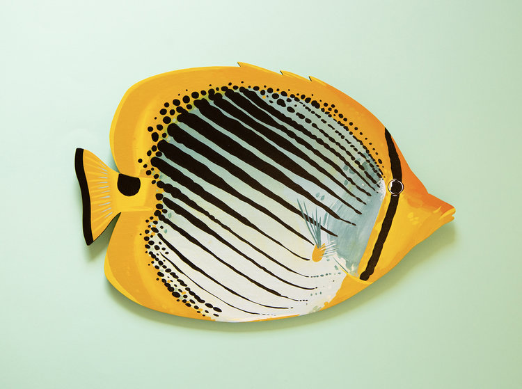 Spot-Tail-Butterflyfish-Copyright-Outer-Island.jpeg