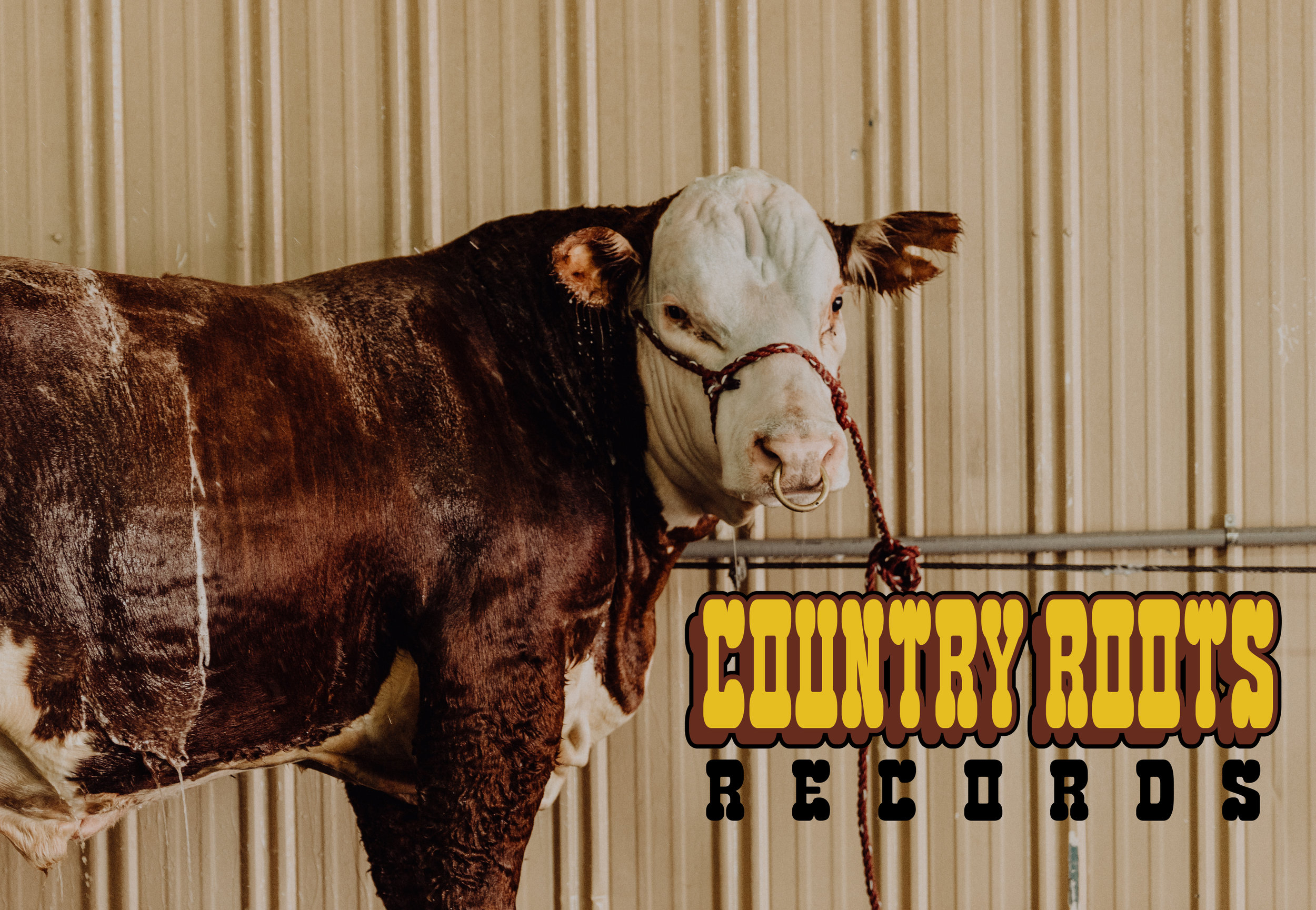 COUNTRY ROOTS BULL featured image 2.jpg