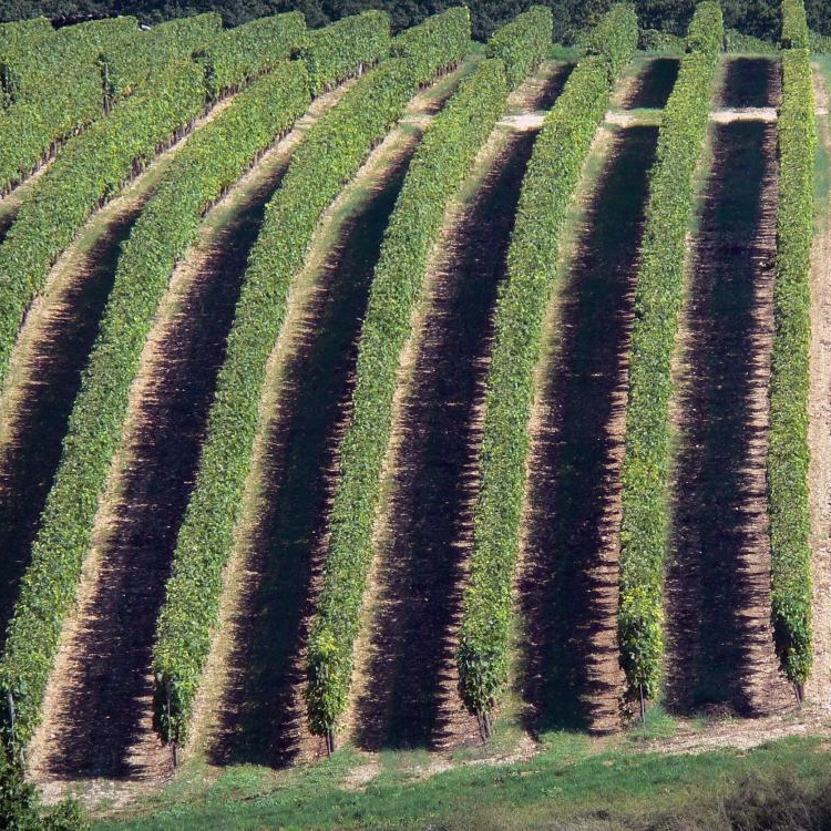 vignoble-cognac-13320_w1000.jpg
