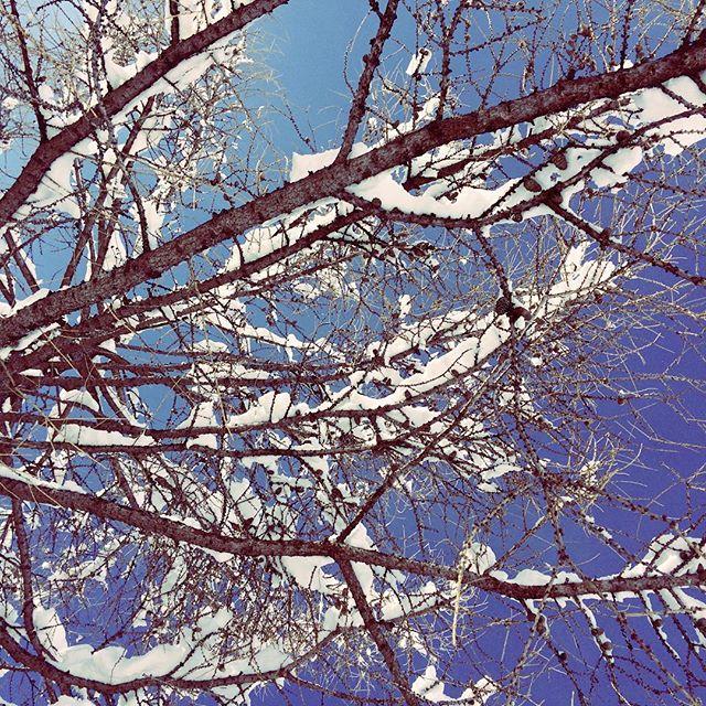 ciel bleu 🔵 neige fraîche❄️température printanière☀️. #easterweekend 👌 #snowmind #touroperator #winter #snow #free #freestyle  #photography #instamountain #montagne #mountain #instagram #nature #travel #traveller #word #france #auvergnerhonesalpes #isere #les2alpes