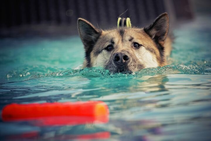 A reward can be: - food (for some dogs kibble, for others liver cake)the way of food deliverytoy or a favourite objectplay with other dogchewingsniffingletting your dog off leadtouchverbal praisechaseswimmingscent gamesjumping uptraining sessionrolling on back