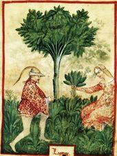 684fb62ae14a8154ce8e9a49f0a22827--medieval-life-medieval-art.jpg