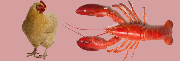 chicken and lobster seconds history.jpg