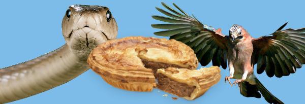 pie-snake-bird.jpg