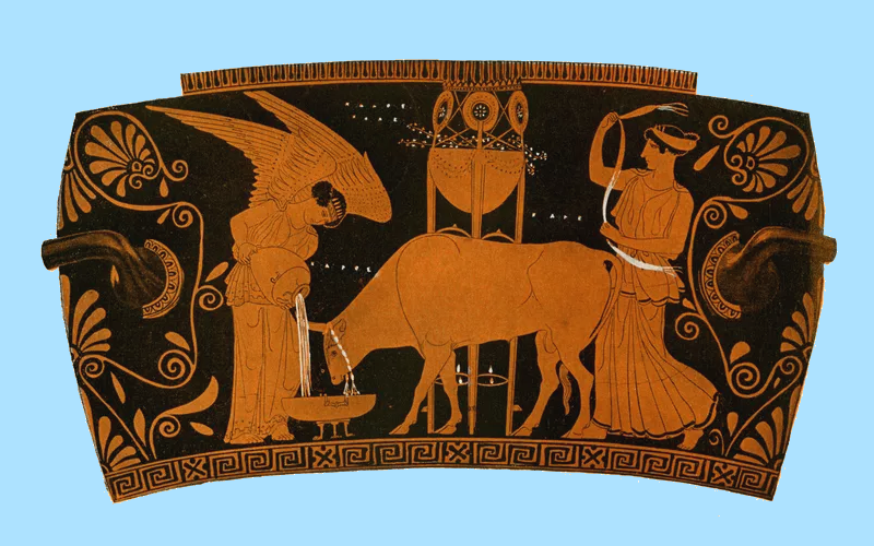 Athenian red figure vase showing women caring for a sacrificial bull, circa 5th century BCE.